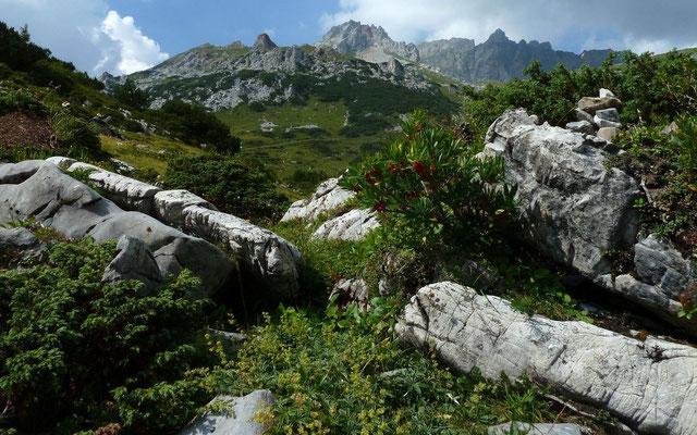 Die roten Beeren der Alpenrose weisen auf die frühe Reifung und das heiße Wetter hin