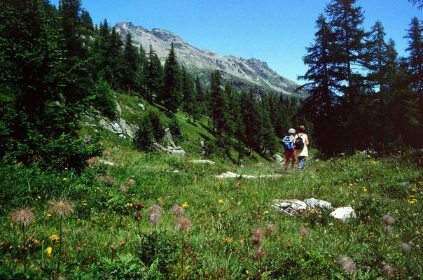 Landschaftlich reizvolles Wegstück durch lichten Wald mit vielen Blumen