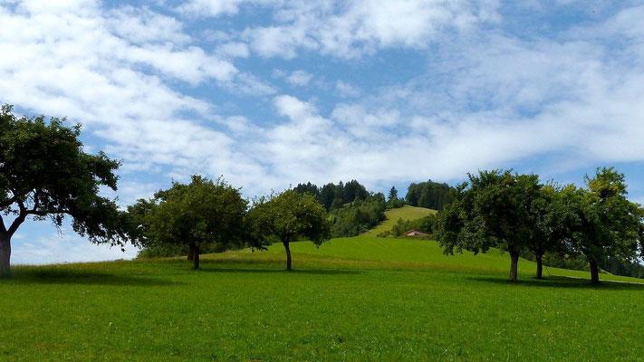 Der lange Wiesenhang des Freithofbergs
