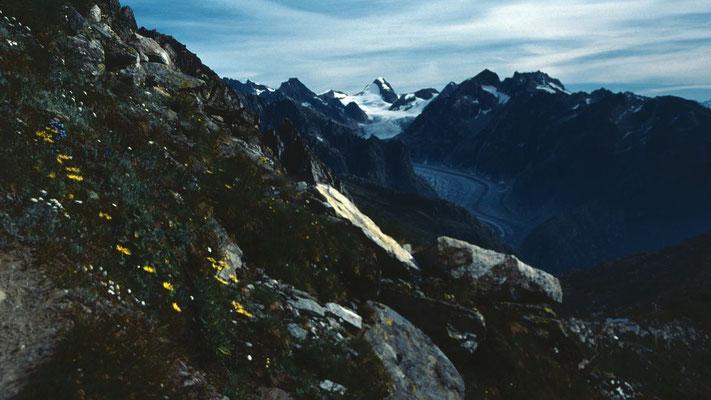 Der Walliser Fieschergletscher vom Aufstiegsweg