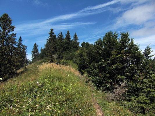 Am Kamm der Bodenwies geht es nur noch leicht bergauf und eben zum Gipfelkreuz.