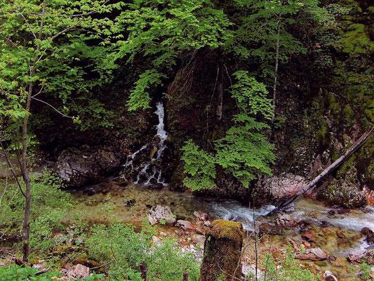Quellen über der Steyrling vom Wanderweg in den Bodinggraben