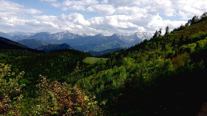 Gesäuse vom Forstweg in der Ostflanke der Bodenwies zur Menauer und Schüttbauer Alm
