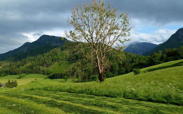 17.05.2015: Berge des Nationalparks Kalkalpen