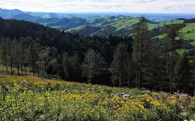 Gegend bei Steyr vom Plattenberg