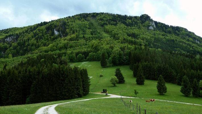Die Narzissenwiese liegt im östlichen Abhang des Schiefersteins verborgen.
