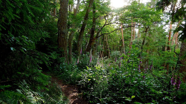 """Urwaldähnliches Gebiet im """"Felsenkeller"""" des Fürther Stadtwalds"""