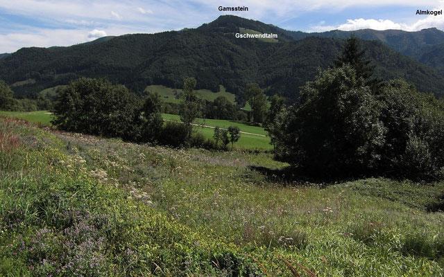 Biotop mit Pfefferminze u.a. Staudenpflanzen für Bienen, Hummeln u.a. Insekten
