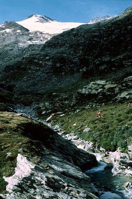 Das vergletscherte Seewjinenhorn vom Aufstiegsweg hinter dem Mattmark-Stausee