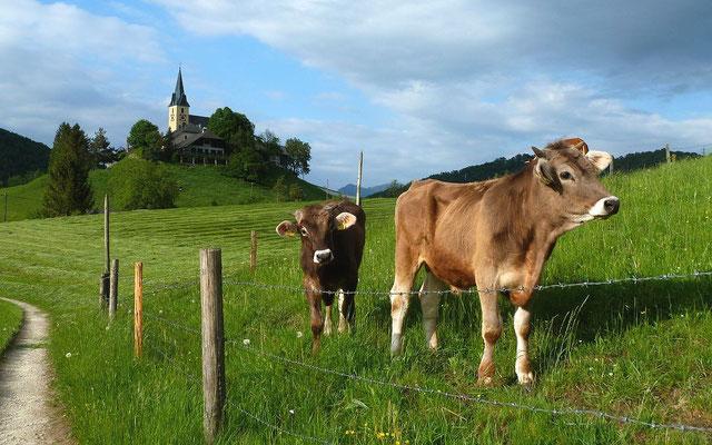 17.05.2015: Wiesenspaziergang bei Frauenstein
