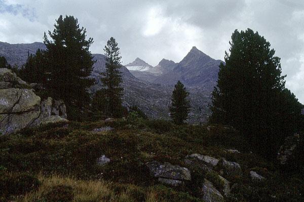 Der Leitenkammersteig führt durch das mit Zirben bewachsene Blockwerk mit Blick zum Wildkar und zur Wildkarspitze