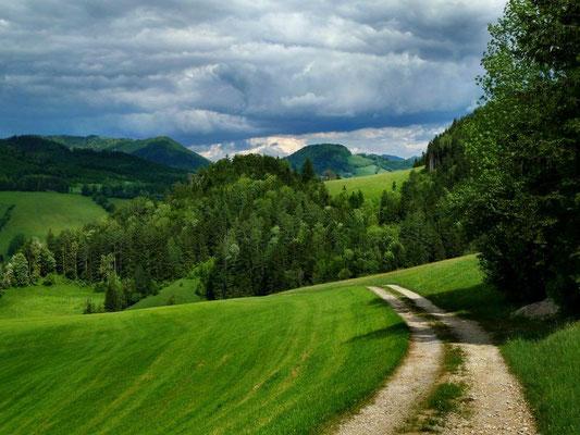 Auf dem Rückweg zwischen Hollnbuchner Siedlung und Neuhaus