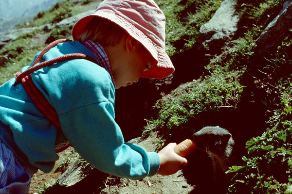 Annette fuettert ein Murmeltier mit einer Karotte.