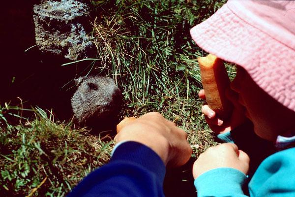 Thomas und Annette locken ein Murmeltier mit Karotten aus dem Bau