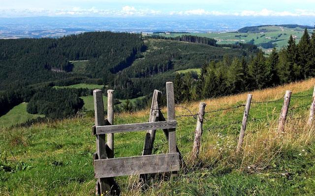 Am Kamm des Plattenbergs. Sicht über das Alpenvorland zum Böhmerwald.