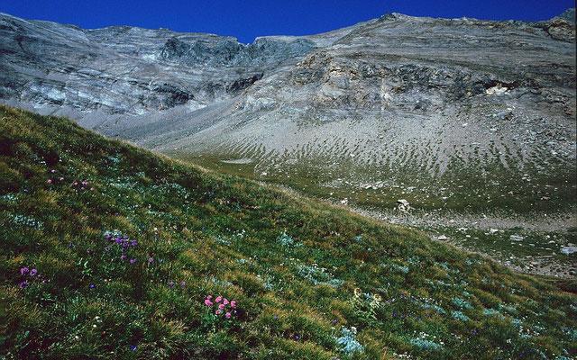 Naturschutzgebiet Gamsgrube - ein blumenreicher Winkel auf dem Weg zum Wasserfallwinkel