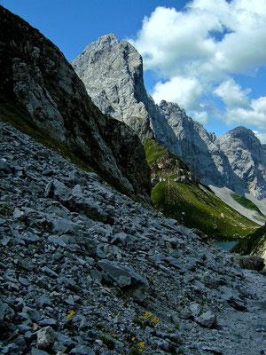Gelber Alpenmohn im Dolomitschutt des Karnischen Kamms