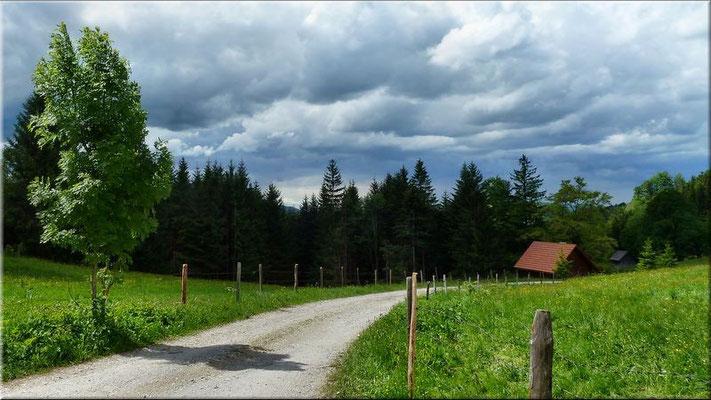 Am Wanderweg von Neuhaus zur Narzissenwiese