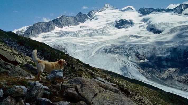 Der Großveneidger im Rückblick. Hund eines anderen Bergsteigers.im Vordergrund.