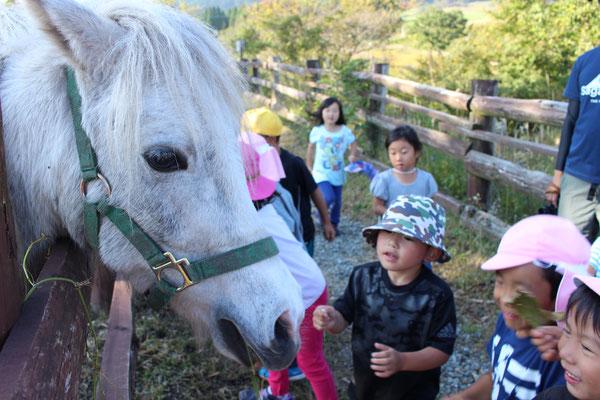 やまなみ牧場で、うさぎや馬などに触れて大興奮!