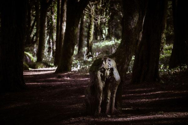 Im nebligen Wald um Cascais bei Lisboa ist alles etwa sunheimlich