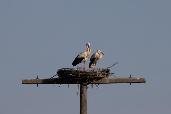 Storchenpaar im Nest am 31.03.21 (Foto: B. Budig)