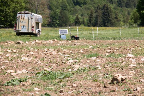 Steiniger Boden ungeeignet für Ackerland /Foto: B. Budig