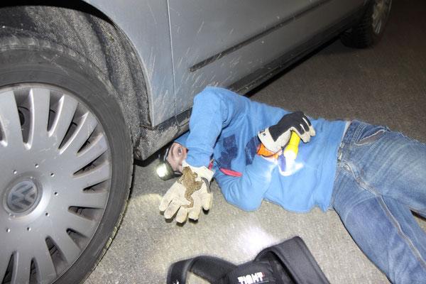 Voller Einsatz: Malte holt eine Erdkröte unter einem parkenden Auto hervor (Foto: B. Budig)