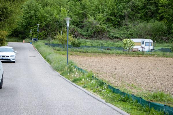 Der eingewachsene Zaun (Foto: B. Budig)