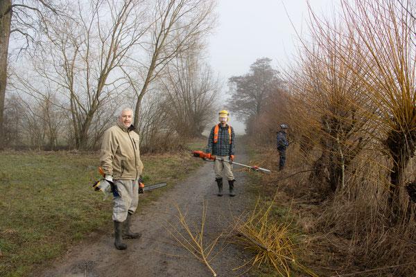 Mit Motorsäge geht es der Weide an den Kragen (Foto: B. Budig)