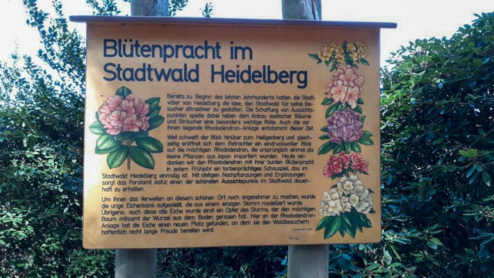 Informationsschild Blütenpracht im Stadtwald Heidelberg