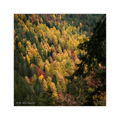 Schwarzwald / Baden-Württemberg