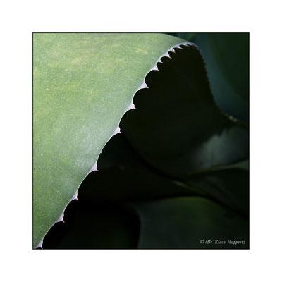 Agavenblatt