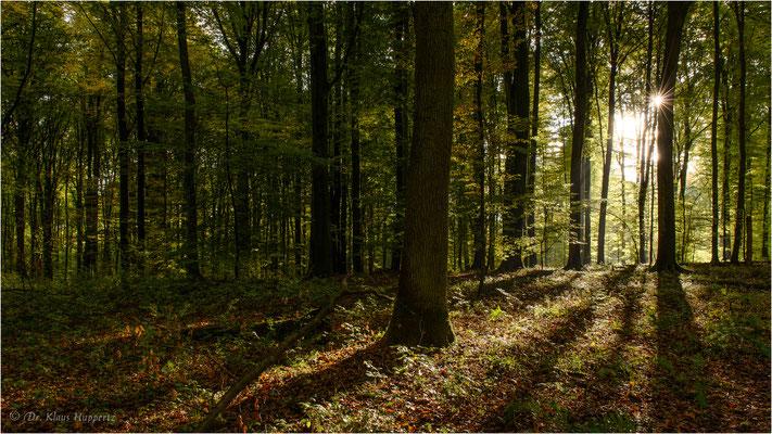 Fürfeld / Baden-Württemberg