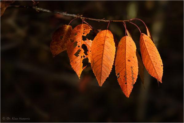 Blätter / Herbst