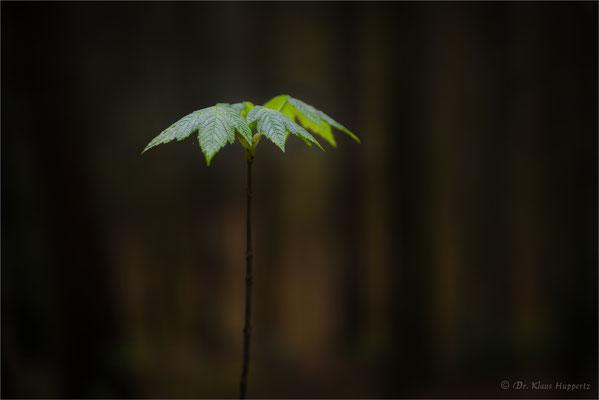 erstes Grün im Wald