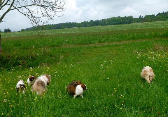 ... denn die Wiese gehört den Bauern für ihr Vieh, und es sollte weder plattgetreten noch verunreinigt werden.