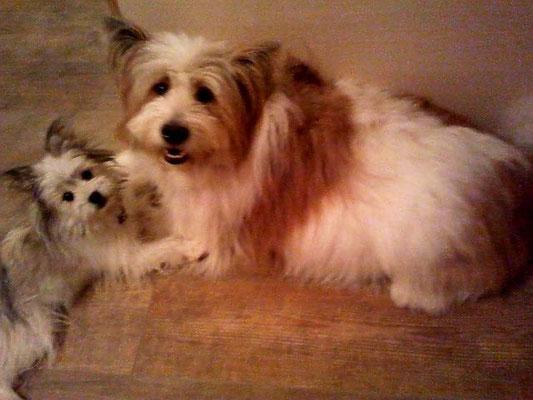 Pookie erklärt Milou, dass sie mit den Babies im Bauch nicht mehr mit ihr spielen kann.