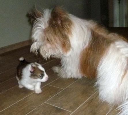Pookies erste Spielversuche - der kleine Mann ist noch recht zaghaft.