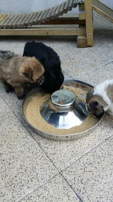 O-Milou mit Schwester Oxana und Bruder Ole beim abendlichen Festmahl.