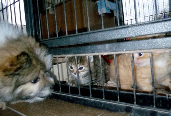 Milou mit unseren beiden Katzenwaisen.