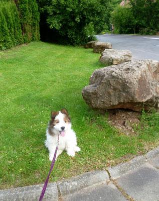 Alleiniger Spaziergang mit Klein-Pookie.