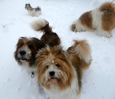 Unsere Elos im Schnee.
