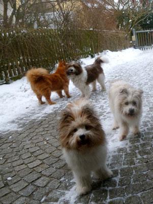 Den meisten Hunden mit Fell gefällt diese trockene Kälte am besten.