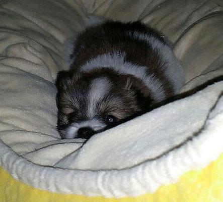 Die kleine Maus ist nun 3 Wochen alt und heißt O-Milou...
