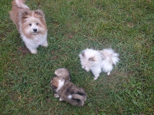 Hundemutter und Welpen