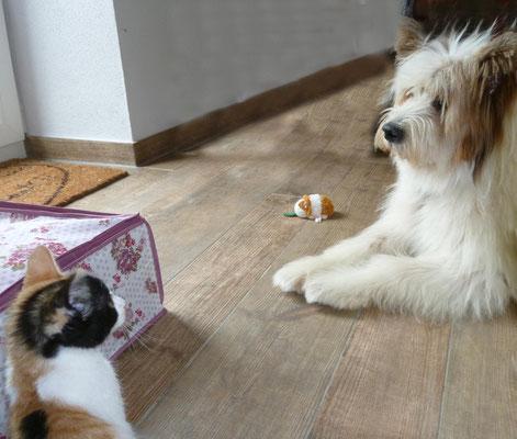 ..und Luna traut der lieben Pookie.