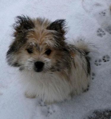 Für Milou ist es der erste Schnee...