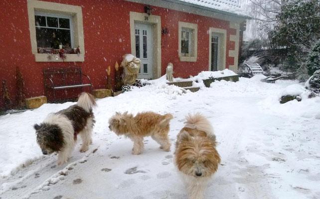 ...,und geniessen den vielen Schnee.