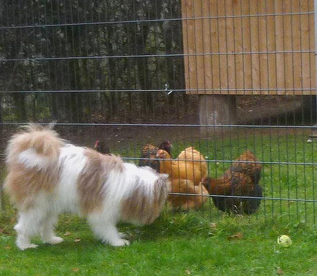 Alle waren interessiert an den Hühnern.